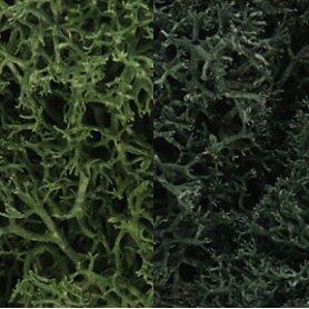 Woodland WL168 Zarośla - Dark Green Mix Lichen (1.
