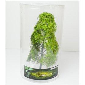 BSM Drzewo liściaste - Brzoza 23-25cm