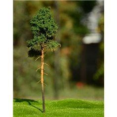Freon Drzewko Sosna młoda 8-12cm