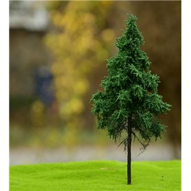 Freon Drzewko Świerk Pospolity wysokopienny 8-12cm