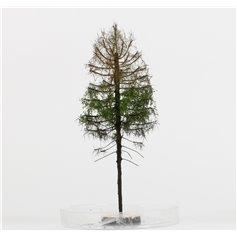 Freon Drzewko Modrzew suchy 14-16cm