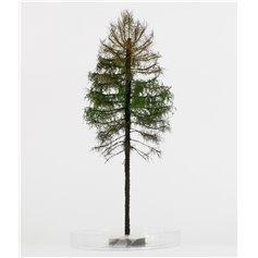 Freon Drzewko Modrzew suchy 18-20cm