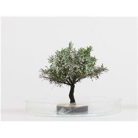 Freon Drzewko Jabłoń kwitnąca 6-8cm
