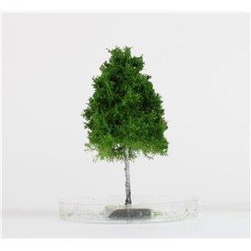 Freon Drzewko Brzoza 8-12cm